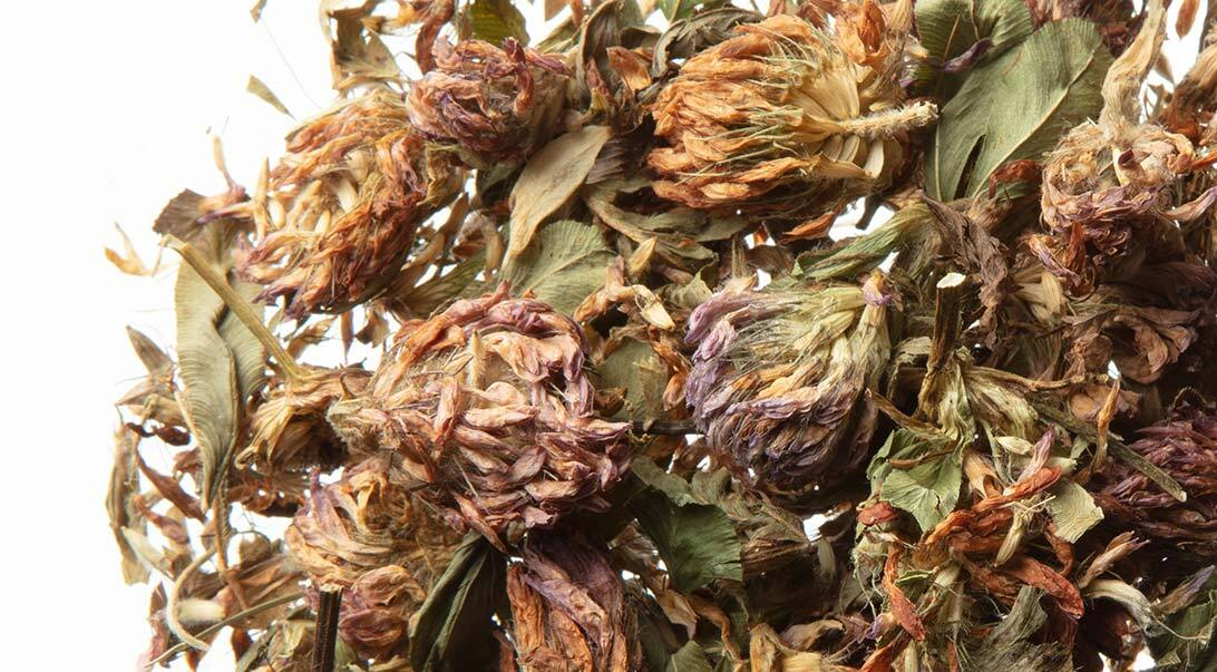 Red clover tops, whole Organic