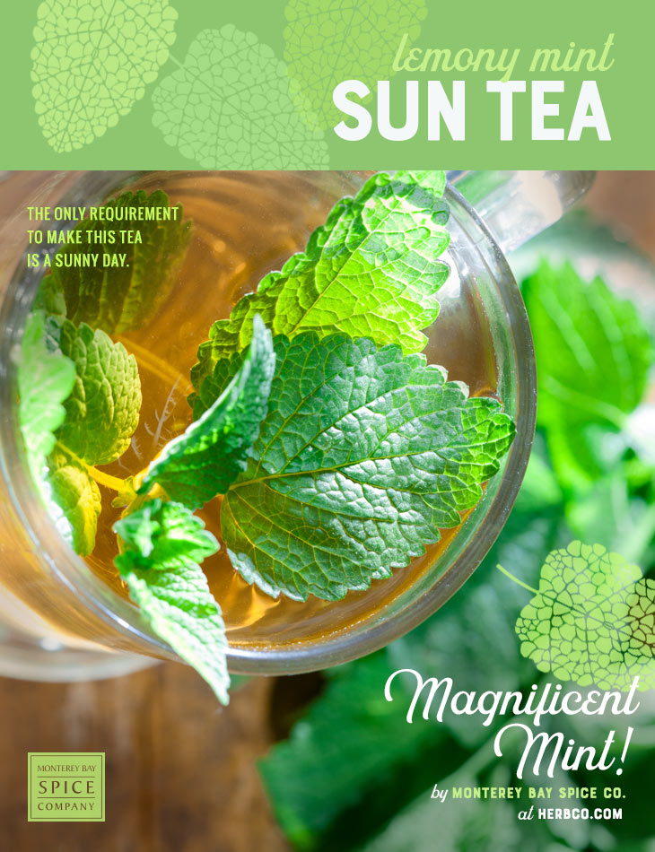 [ Recipe: Lemony Mint Sun Tea Recipe ] ~ from Monterey Bay Spice Co