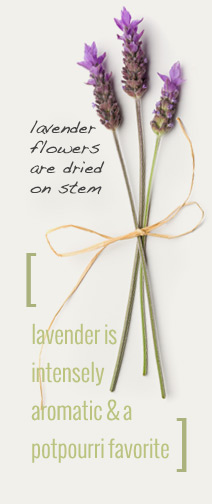 Lavender Flower And How To Make Lavender Water